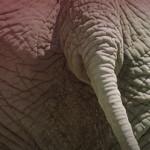 fb-image-olifant